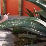 Succulent Graffiti (& bird)