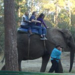 I'm on a boat... no wait... elephant.