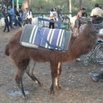 Wish I were a hundred lbs lighter... I could have ridden a llama!