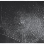 Untitled Web 2 Mezzotint by Vija Celmins