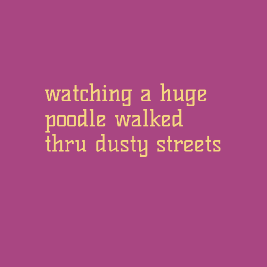 watching a huge poo­dle walked thru dusty streets