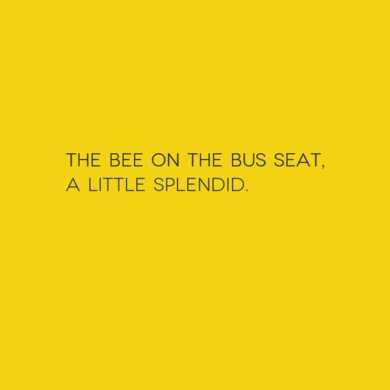 The bee on the bus seat, a little splendid.