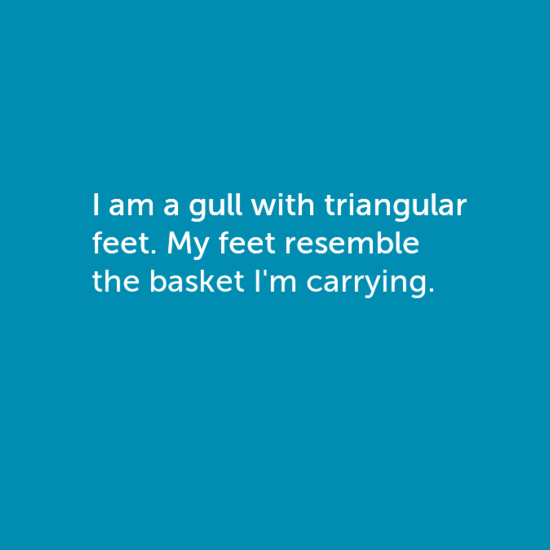 I am a gull with triangular feet. My feet resemble the basket I'm carrying.